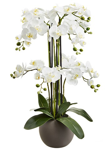 "33.5"" Phalaenopsis Orchid Plant x9 in Terra Cotta Pot White"