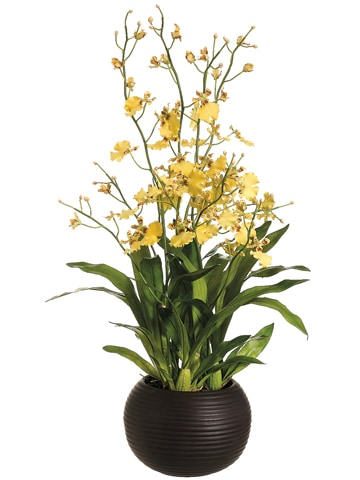 """38"""" Dancing Orchid Plant inSphere VaseYellow"""