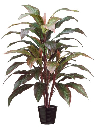 "40"" Cordyline Plant x4 in Black Round Plastic Pot Red Green"