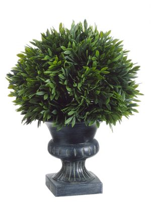 """9""""H x 6.5""""D Podocarpus with 57Leaves in Plastic UrnGreen"""