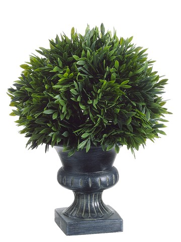 "9""H x 6.5""D Podocarpus with 57 Leaves in Plastic Urn Green"