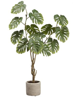 "28"" Split Philodendron Plant in Cement Pot Green"