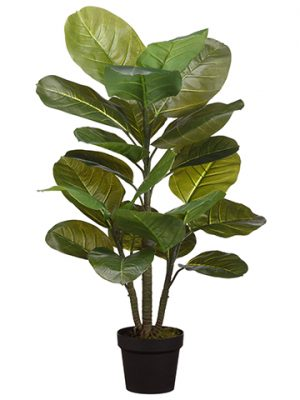 "36"" Large Leaf Rubber Plant in Pot Green"