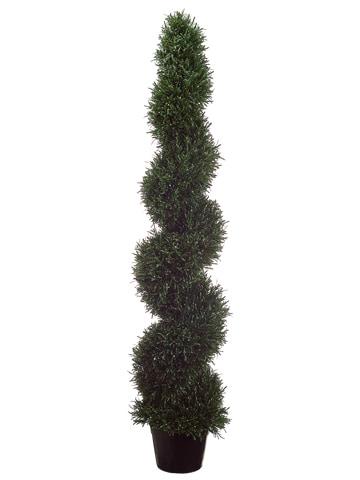 5' Rosemary Spiral Topiary inPlastic PotGreen