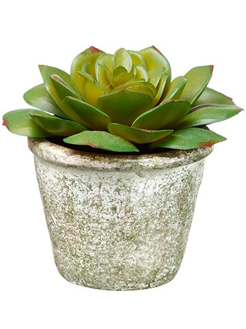 "4"" Echeveria in Paper Mache Pot Green"