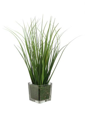 "15"" Grass in Glass Vase Green"