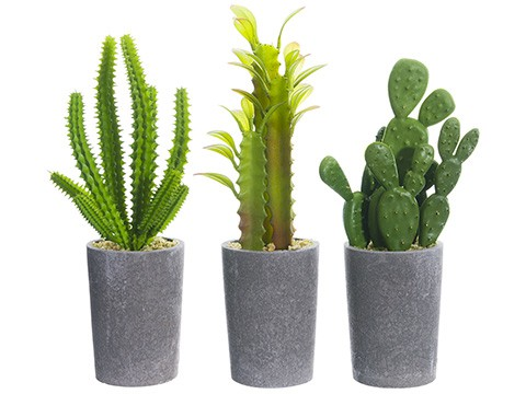 "7"" - 8"" Cactus in Paper Mache Pot Assortment (3 ea/set) Green"