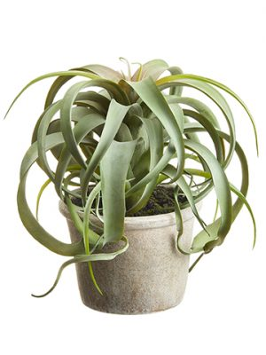 "10.5"" Tillandsia in Paper Mache Pot Green"