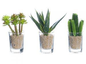 """3.5""""-4"""" Cactus in Glass VaseAssortment (3 ea/set)Green"""