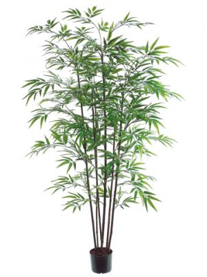 5' Black Bamboo Tree x7 with 1200 Leaves in Pot Green