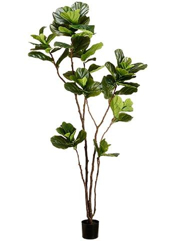 7' Fiddle Leaf Tree in Pot Green