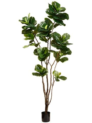 8' Fiddle Leaf Tree in Pot Green