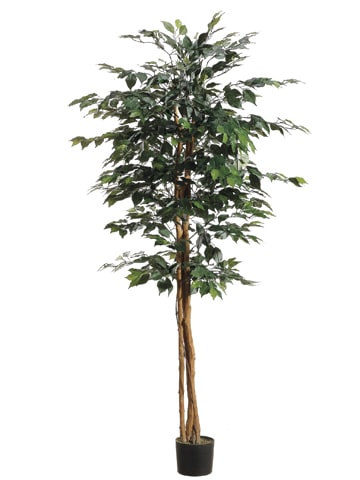 6' Ficus Tree with 1008 Leaves in Pot Green
