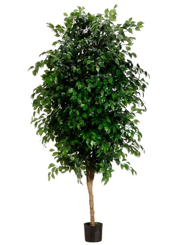 7' Ficus Tree with 3780 Leaves in Pot Green