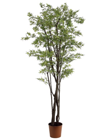6' Mini Japanese Maple Treew/1248 Leaves in PotGreen Brown