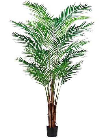 7' Areca Palm Tree x19 With739 Leaves in Pot (knock-DownPacking) Green