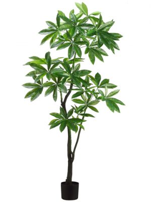 6' EVA Pachira Aquatica Tree Green
