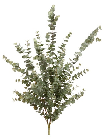 "57"" Eucalyptus Bush x28 Green Gray"
