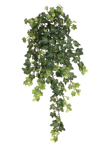 "22.5"" Lace Ivy Hanging Bush x13 with 303 Leaves Green"
