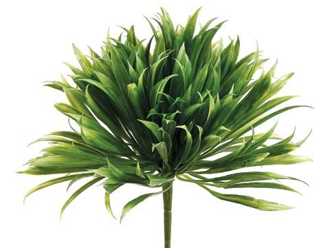 """8"""" Rye Grass Pick Green"""