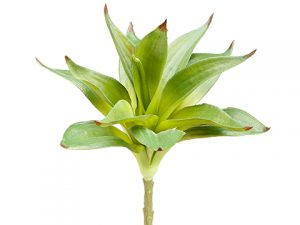 "10"" Dracaena Spray Green"