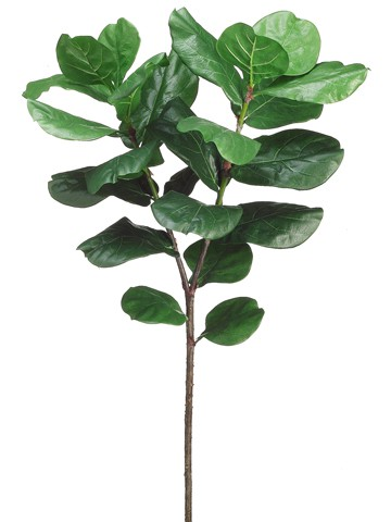 "57"" Fiddle Leaf Branch Green"