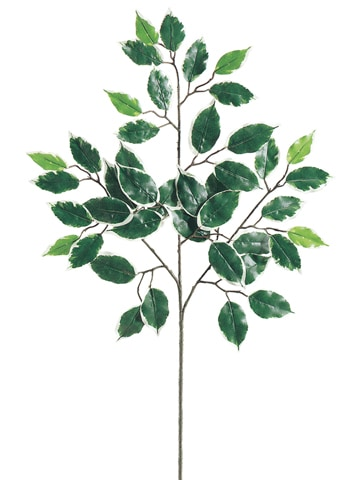 "23"" Deluxe Variegated Ficus Spray x3 w/42 Leaves"