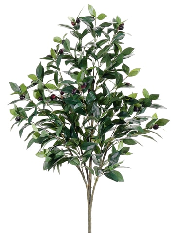 3.5' Olive Tree Two Tone Green