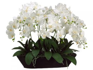 "27""H x 20""W x 30""L White Phalaenopsis Orchid in Oval Container Cream"