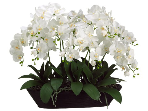 """27""""H x 20""""W x 30""""L WhitePhalaenopsis Orchid in OvalContainer Cream"""
