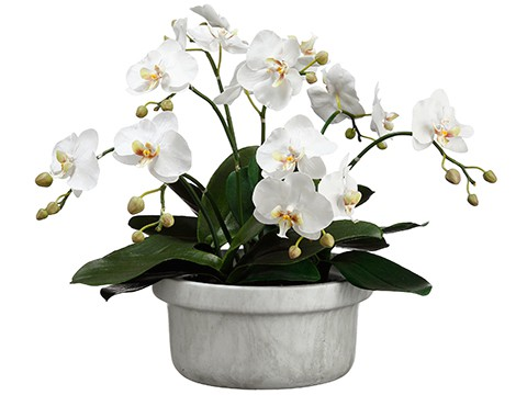 "15.5""H x 18""W x 18""L PhalaenopsisOrchid Plant In Terra CottaPot White"