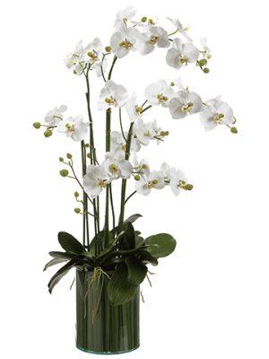 """44""""H x 21""""W x 29""""L Orchids inSoil Glass VaseWhite"""