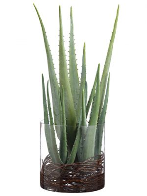 "27""H x 15""W x 16""L Agave Twig in Glass Vase Green"