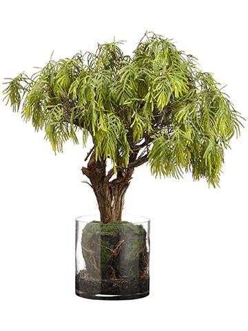 """28""""H x 23""""W x 28""""L Acacia TreeAnd Organic Soil in Glass VaseGreen"""