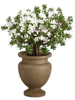 """36""""H x 27""""W x 27""""L RhododendronPlant in Fiber Clay PlanterWhite Green"""