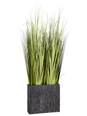 8' Reed Grass in Fiber CementContainerGreen