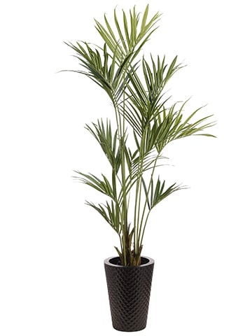 8' Kentia Palm in Metal Pot Green
