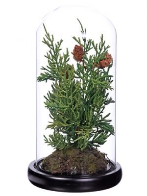 "10"" Juniper Tree in Glass Dome Green"