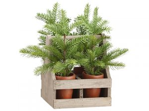 "13"" Pine in Cement Pot x4 With Wood Carrier Green"