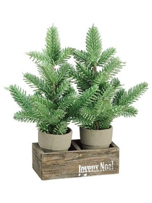 "13.5"" Pine Tree in Cement Pot x2 w/Wood Box Green"