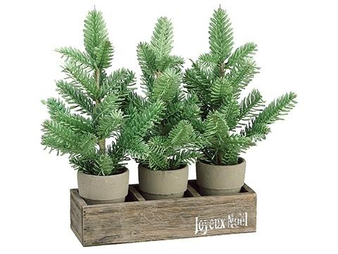 "13.5"" Pine Tree in Cement Potx3 w/Wood BoxGreen"