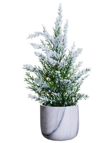 "14"" Snowed Pine Tree in Ceramic Pot Green Snow"