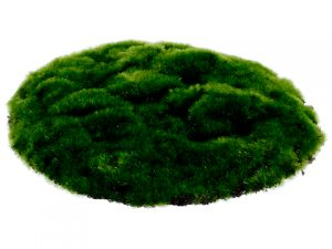 "10"" Round Moss Sheet W/Header Card & Polybag Green"