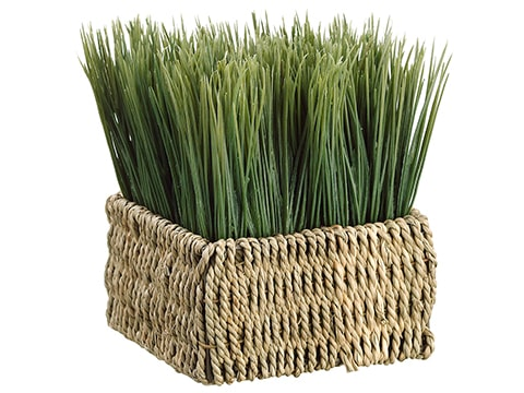 "6""H x 5""W x 5""L Grass in Basket in Re-Shippable Box Green"