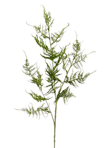 """34"""" Asparagus Spray Green"""