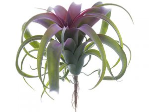 "10.5"" Tillandsia Pick Green Burgundy"