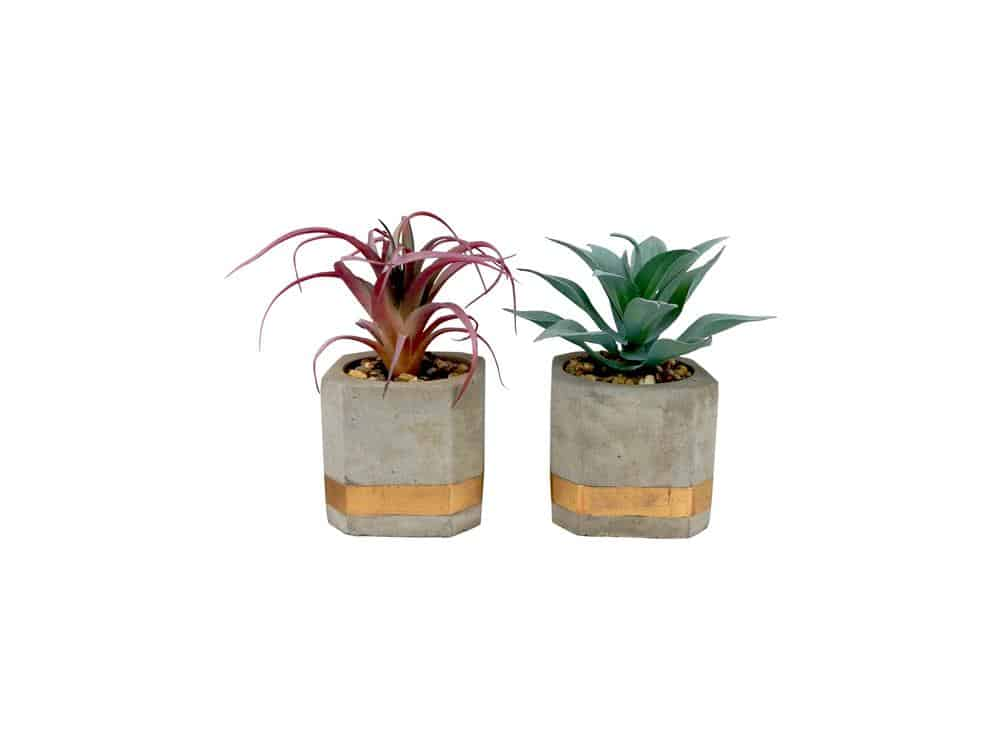 Set of 2 succulents in modern cement pots