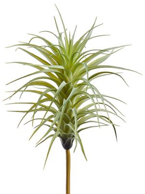 "10"" Tillandsia Pick Green Gray"