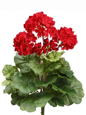 "15"" Geranium Bush x5 Red"