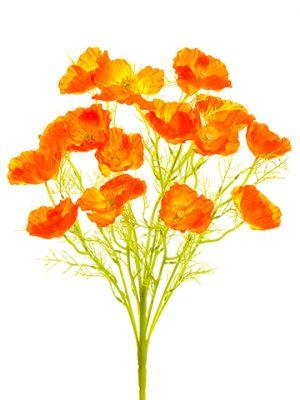 """21.5"""" Poppy Bush x11 Orange"""